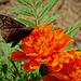 6295767 DxOdL · Butterfly