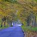 Autumn  road 3