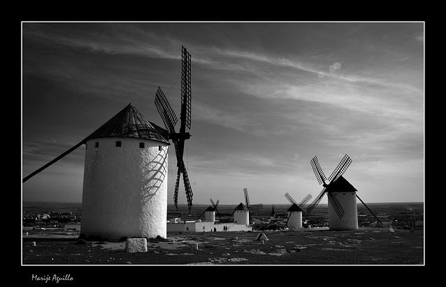 Campo de Criptana. La tierra de Don Quijote.