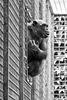 Schimpanse (Tierpark Schwaigern)