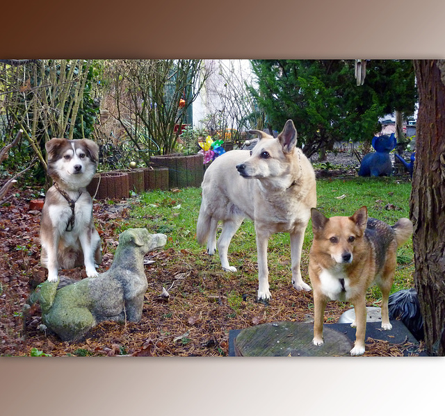 3 lovely souls, 3 good hearts and 12 paws ♥
