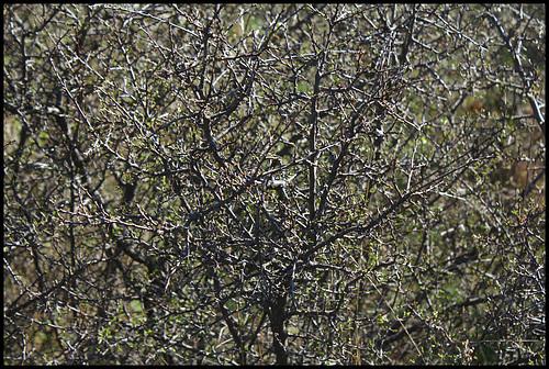 Le temps des prunelliers (9)