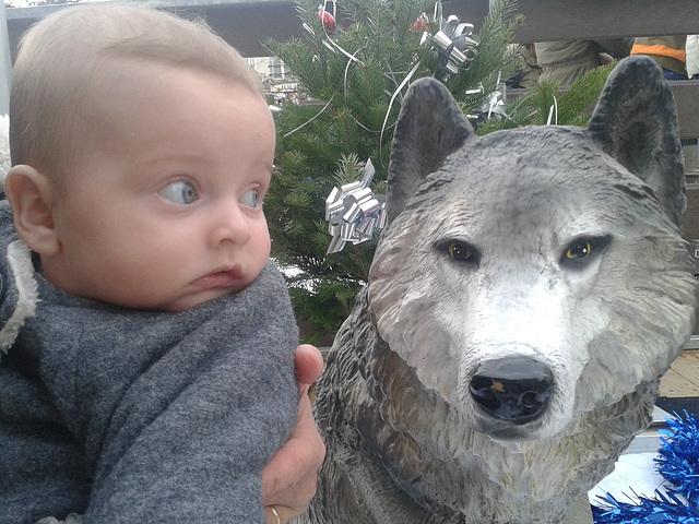 Un loup, ça fait un peu peur !