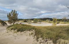 Parking lot landscape.