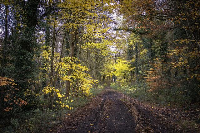 Mid November .. 'Penny engine lane' .. Eckington.
