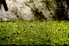 grün flächig