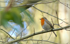 Cute Robin was singing for me... Loved it!