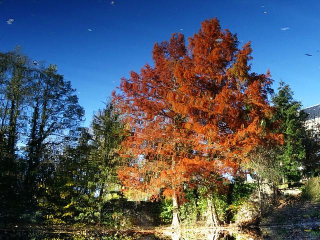 L'envers d'un reflet d'automne [ON EXPLORE]