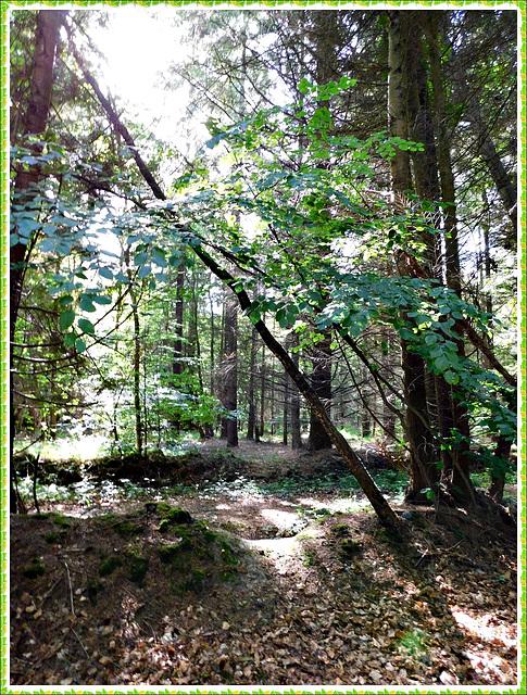Ombre et lumière en forêt de Coetquen