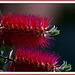 Flor de pistilos rojos