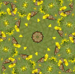 Kaleidoscope ~ Monarch Butterfly