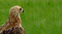 Eagle Eyed IV