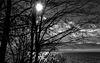 A travers les branches, la lumière