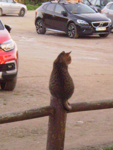 Parking supervisor.