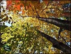 2/366: Autumn Rainbow
