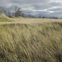 Dune grasses area of Lake Michigan shorescape.