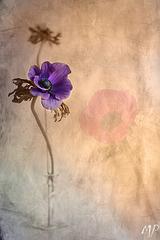 La belleza de una flor