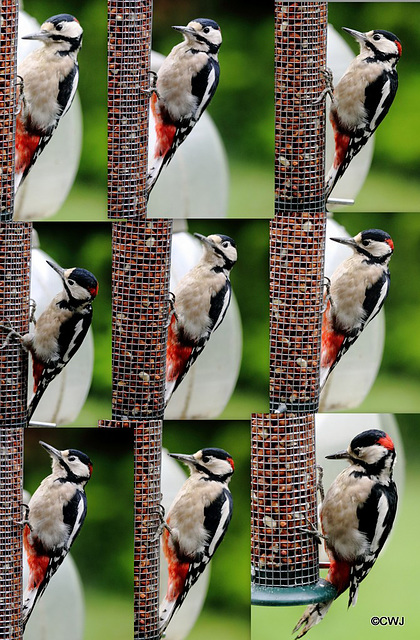 "Have you not ever asked yourself ""Why don't woodpeckers get brain damage?"""