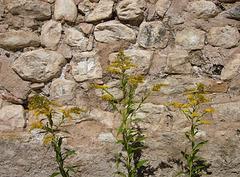 ikebana wall
