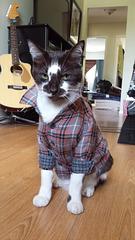 Grunge Cat.