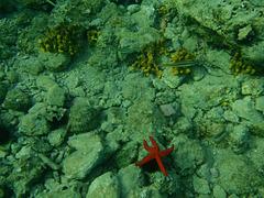 Adriatic Underwater