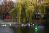 Berlin-Kreuzberg: Herbstidylle am Landwehrkanal - Autumn idyll at the Landwehr Canal