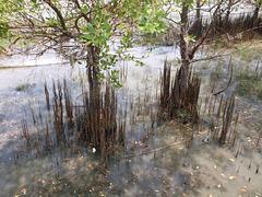 Nature inondée