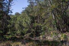 Gulph Creek