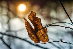 December Sunshine