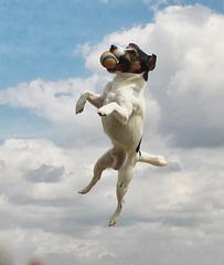 Un chien qui vole : si, si, ça existe (on EXPLORE)