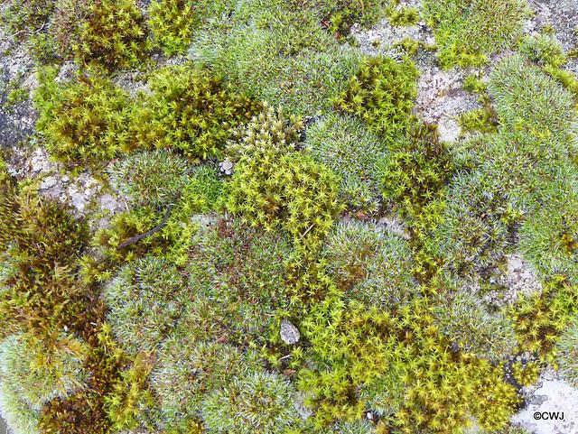 Mosses growing on rock