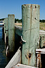 Broomes Island Pilings - Calvert County MD