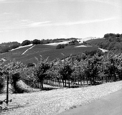 Wolls Ranch Vineyard