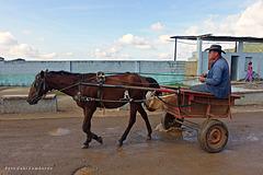 horse drawn-cart in Pinar del Rio/Cuba