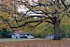 Fall Tree 2017