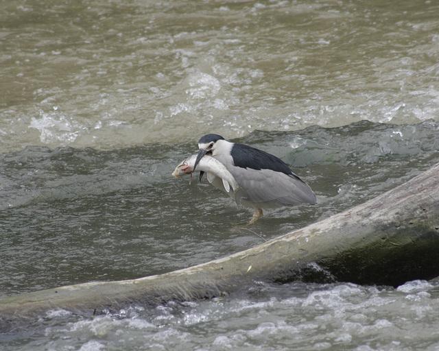 histoire de pêche 2