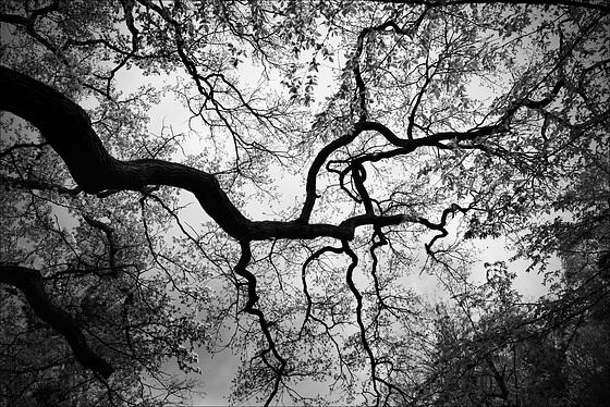 Bois de Vincennes, Sinuaisons