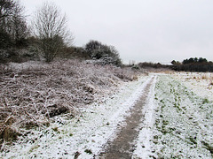 06 snow