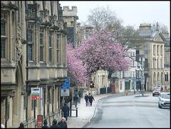 high street blossom