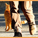Cat -Walk