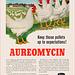 Aureomycin Antibiotic Ad, c1955
