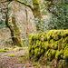 Dartmoor - 20180323