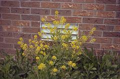 Flowers Near Vent