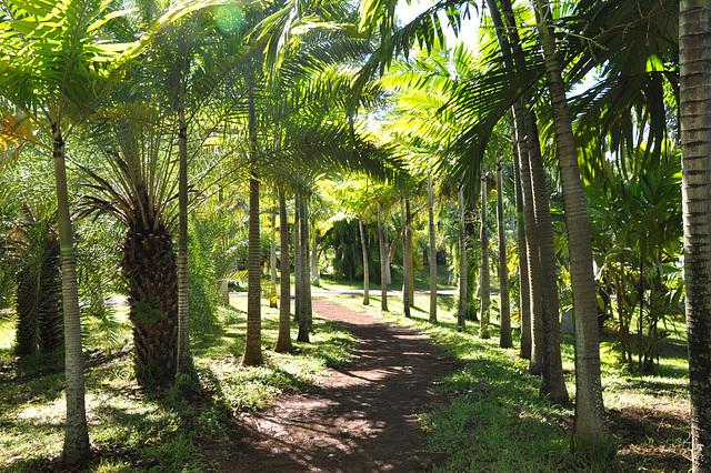 Le Parc des Palmiers