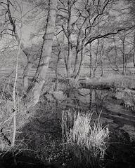 Derbyshire Wye - Old Reed Bed Leet