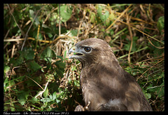 Buse variable DSC01432