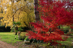 Les couleurs de l'automne comme on aime .