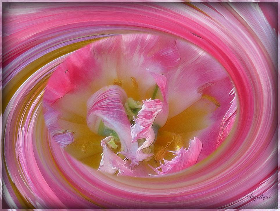 Du rose pour égayer votre journée...!