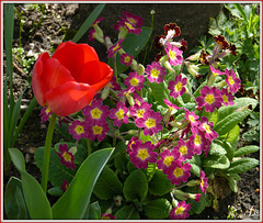 ** Dans mon jardin **