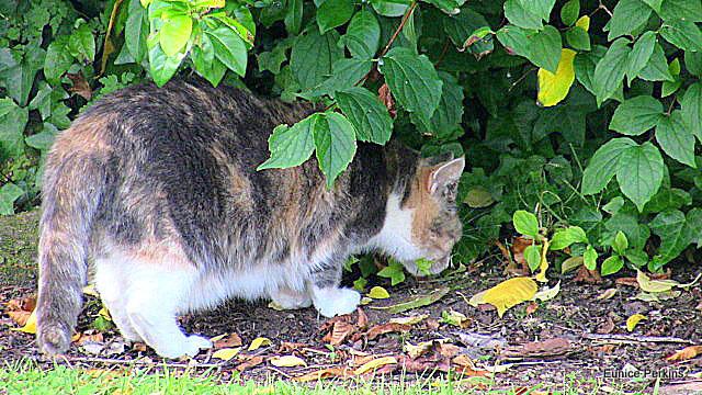 Honey Exploring Under The Hedge.